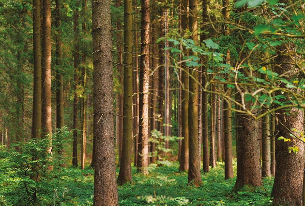 alberi magency udine